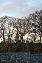 The steeple of St Patrick's College church beyond the trees and wall