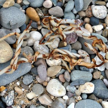 Pebble beach... wire adds to the texture...