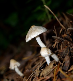 Fungi in the forest... forests of forest fungi!!