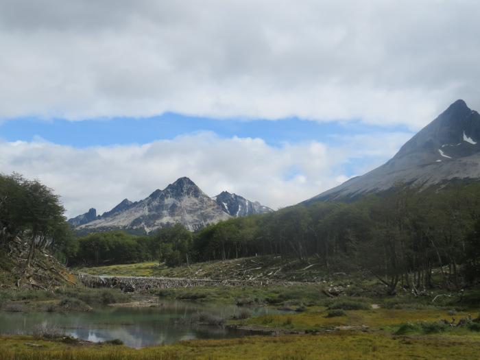 Barrage de castors laguna Esméralda Ushuaia Argentine