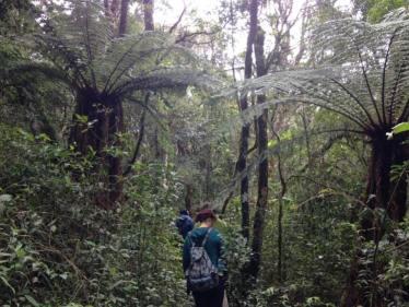 Parc Amboro Samaipata Bolivie