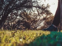 person in black pants lying on green grass field near bare trees during daytime
