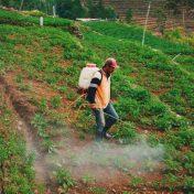 man wearing orange, black, and white jacket spraying on green plants
