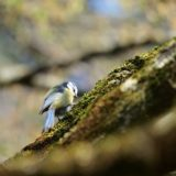 white and black bird on brown tree branch