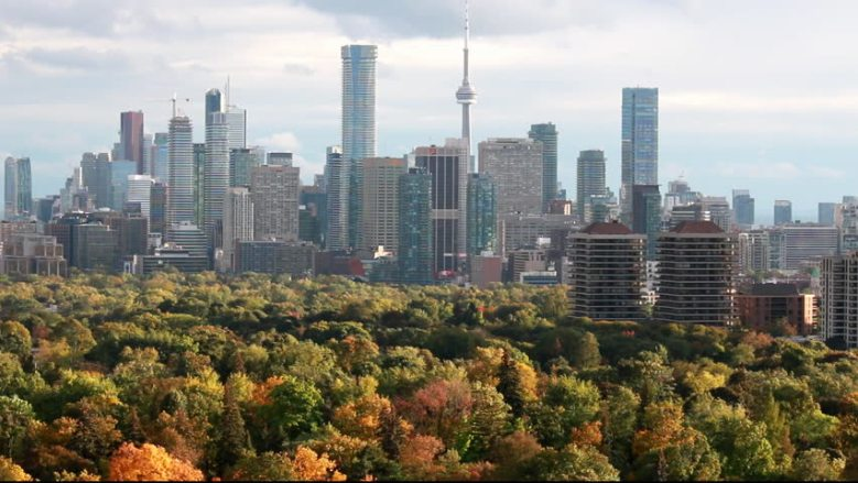 Trees Bylaws in the City