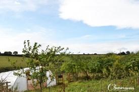 Shillingford Organics Farm School