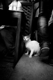 photographs: cat avoiding the feet of pedestrians, black and white
