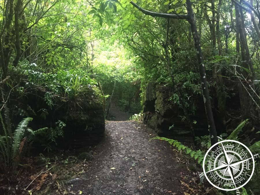 "Der ""Mangawhero Forest Walk"""