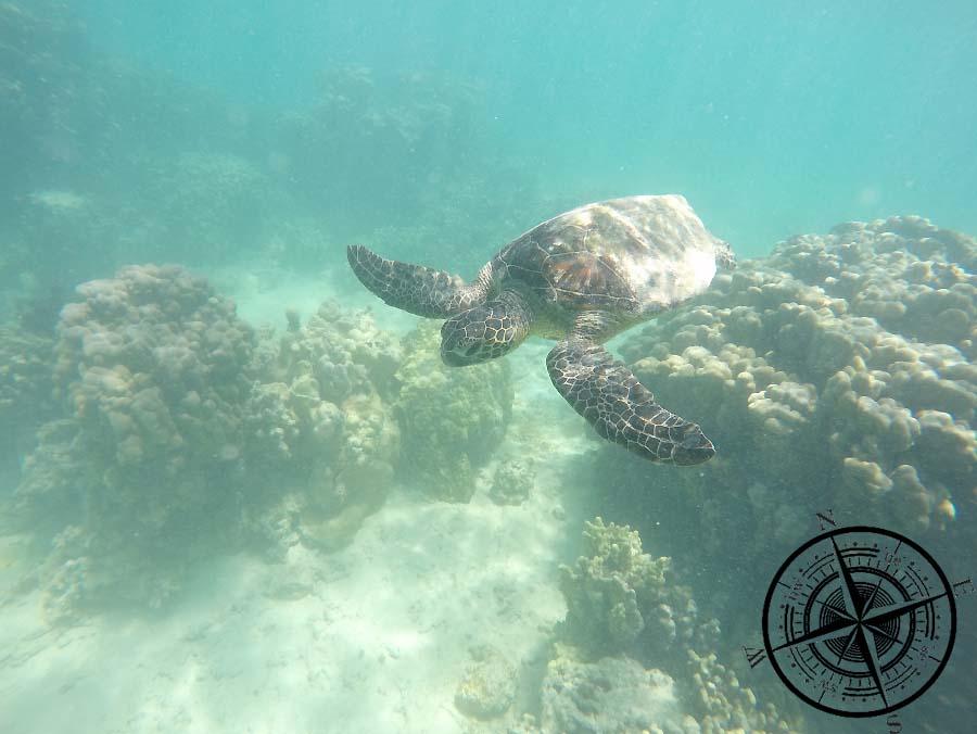 Beim schnorcheln begenete uns eine Wasserschildkröte! Welch schöner Moment!