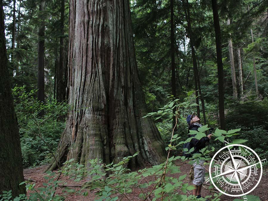 Hier gibts auch große Bäume.