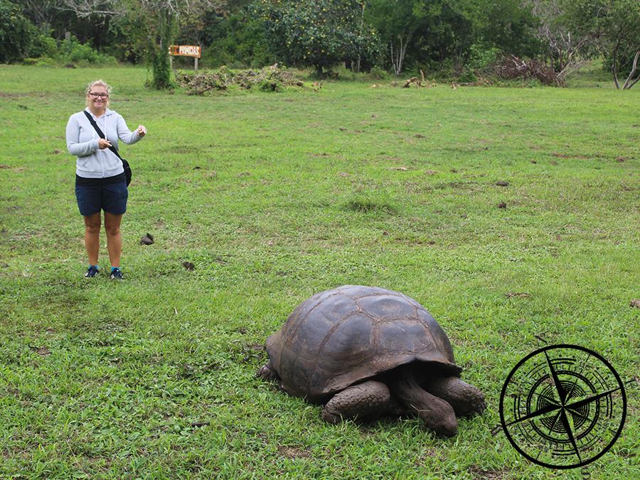 Ein großes Gelände voller Schildkröten!