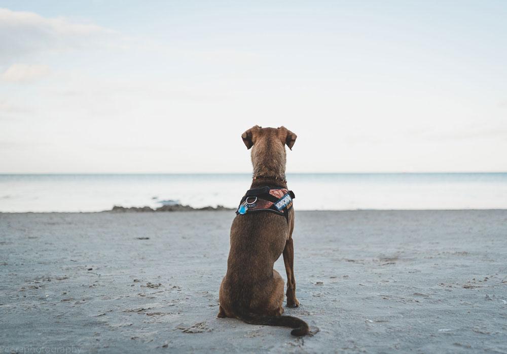 Urlaub mit Hund Paul auf Rügen