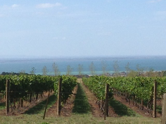 The vines overlooking a prime view over Port Phillip Bay.
