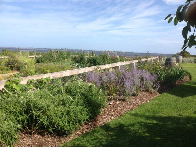 The vegie garden at Kiltynane Winery, kids loved looking in there.