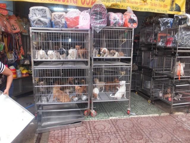 Pet Market - HCMC