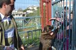 Εκδήλωση για τα αδέσποτα ζώα (6)