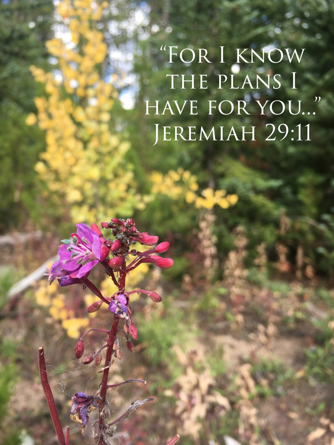 Our Boy Life | Jeremy 29:11
