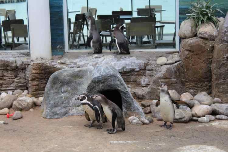 Penguins, Oceanarium Bournemouth Beach