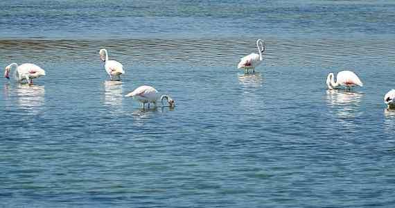 Sardinia Flamingos