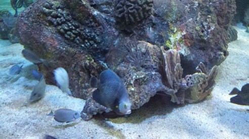 Fish in large coral aquarium