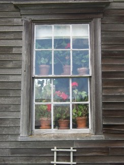 Geraniums in kitchen window