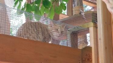 cat in catio catwalk