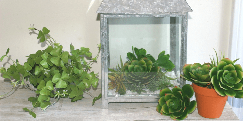 How To Make A Beautiful Succulent Terrarium Centsible Chateau #succulentterrarium