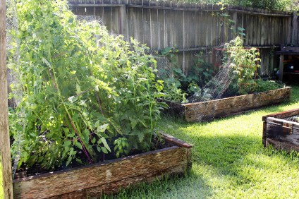 raised_bed_garden_bird_Net