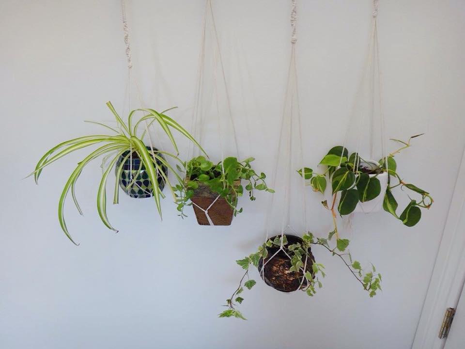 Branch Macrame Plant Hanger DIY (2)
