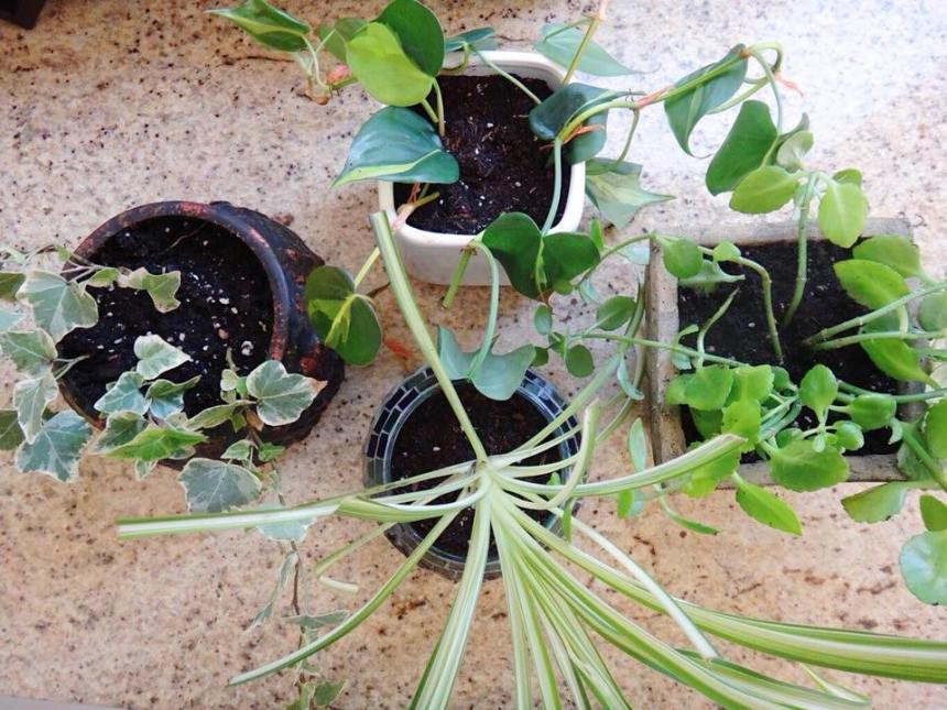 Branch Macrame Plant Hanger DIY (6)