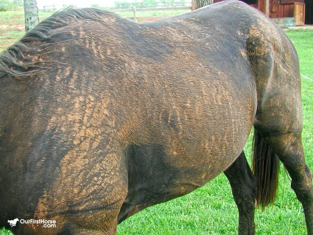 My black...er...brown horse