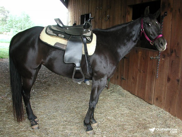 Horse ready for a walk