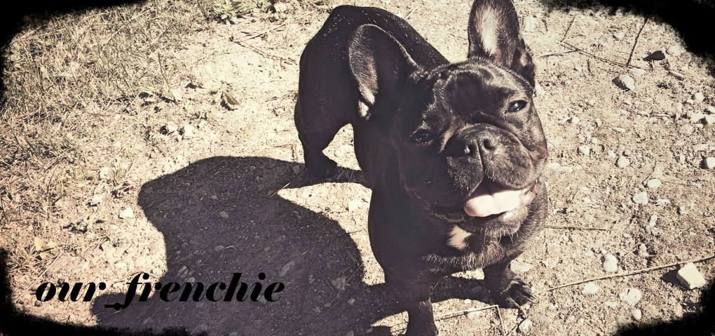 Why Frenchies Fart?