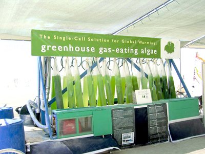 rock n roll gas eating algae