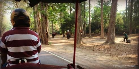 Elephant rides near the South Gate - Angkor Thom