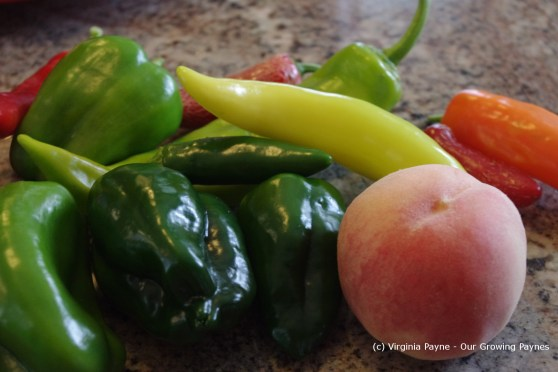 Fire roasted salsa 2 2013