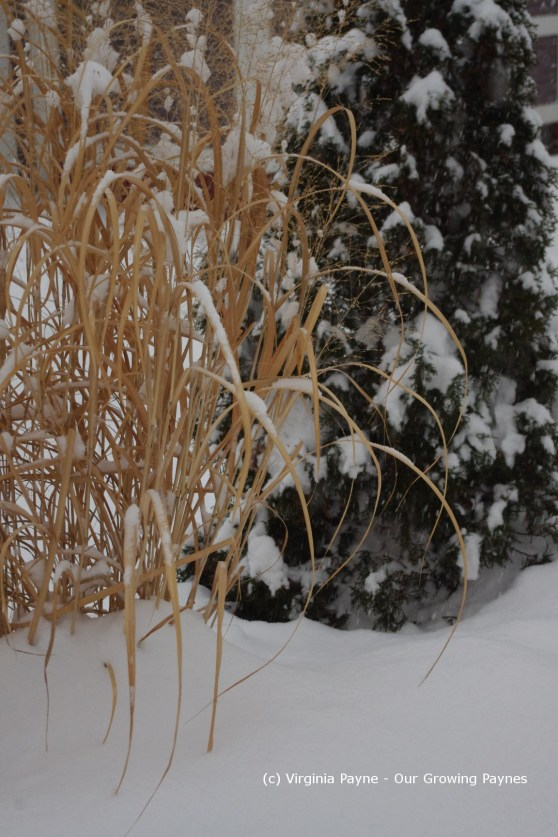 Winter 2 2013