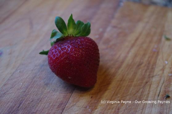 Strawberry rhubarb crumble 1 2014