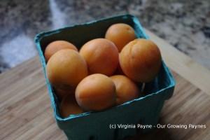 Apricot chutney1 2014