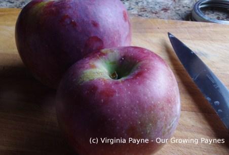 Irish apple cake 4 2015
