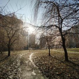 Вчені назвали причину теплої зими в Україні і розповіли, чим загрожує відсутність снігу