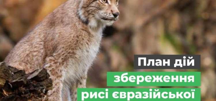 Міндовкілля затвердило План дій збереження рисі євразійської в Україні.