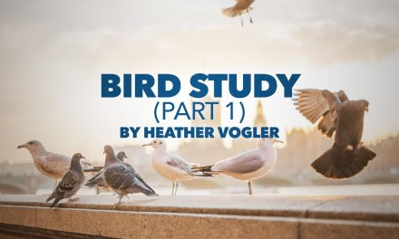 Bird Study – Part 1