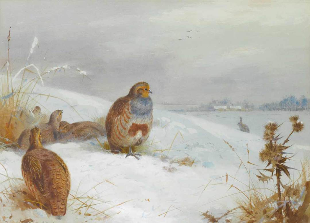 Thorburn's Hard Times Partridges and Hare
