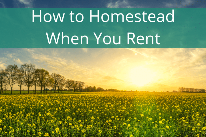 How to Homestead When You Rent (Plus Why Renting May Be Best)