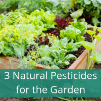 Neem Spray for Garden Pests