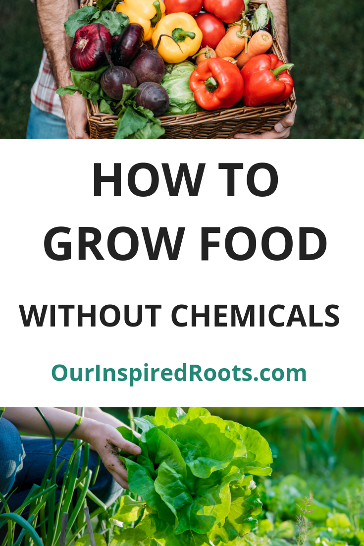 Easy Ways To Grow Organic Vegetables