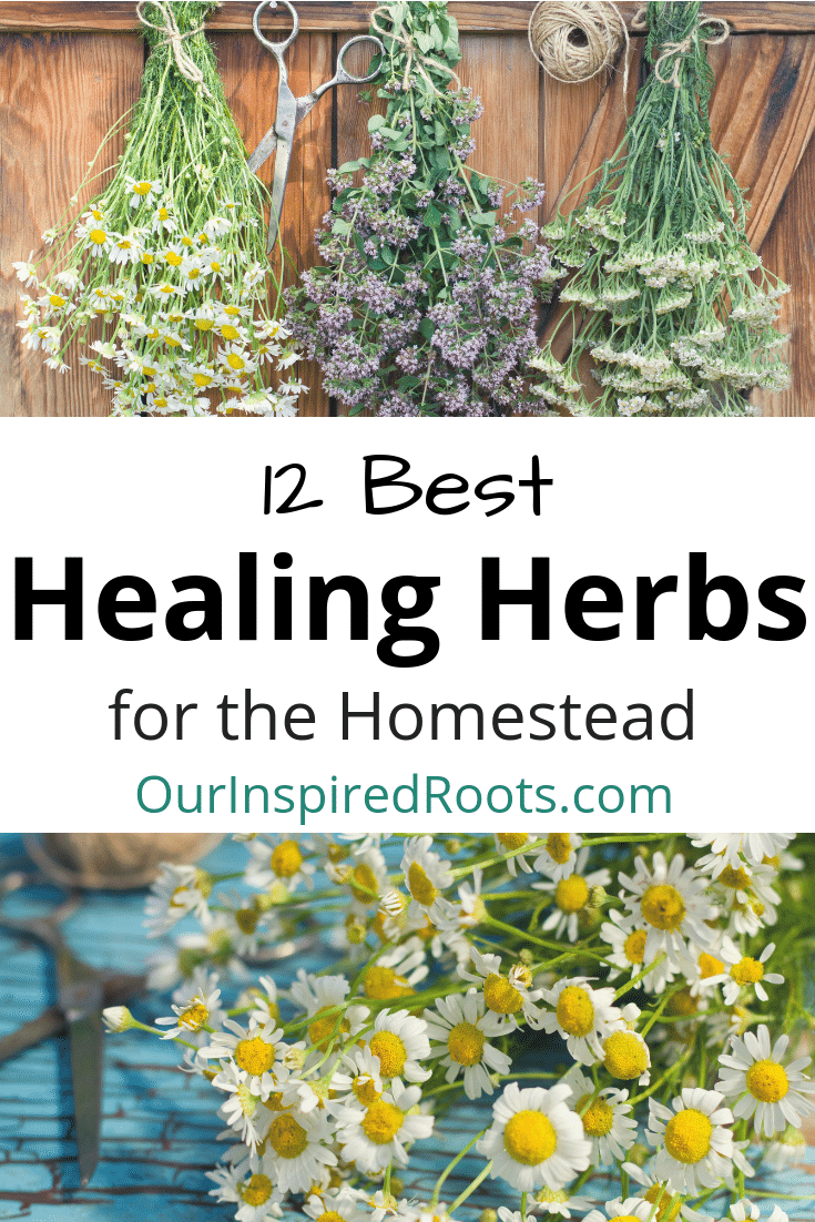 Healing herbs are one of my favorite parts of my homestead garden. They're beautiful AND functional. Find out my favorites, plus how I use them. #herbs #healingherbs #herbalremedies