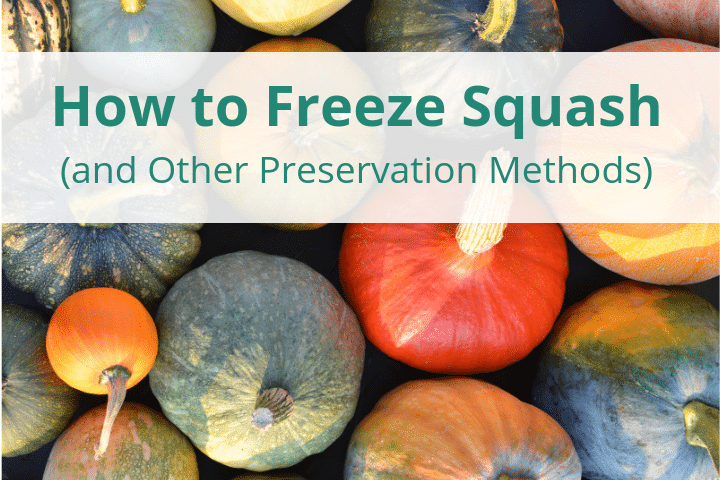 How to Freeze Squash (and Other Preservation Methods)