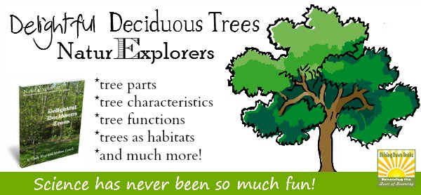The Delightful Deciduous Tree NaturExplorers study is great for any season!